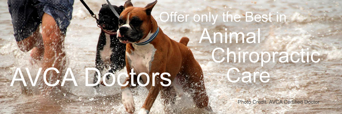 AVCA DOCTORS offer only the BEST in Animal CHIROPRACTIC CARE